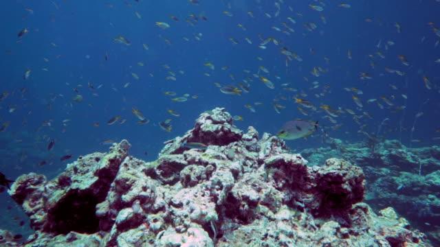 vídeos de stock e filmes b-roll de coral bleaching on damaged reef ecosystem - acidificação dos oceanos