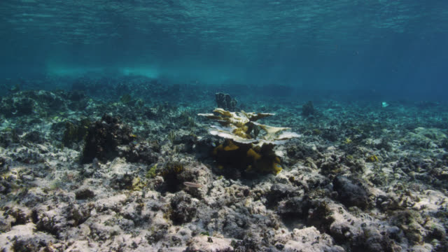 coral bleaching on reef, bimini, bahamas - riff stock-videos und b-roll-filmmaterial