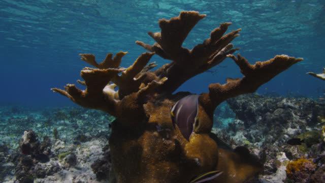 stockvideo's en b-roll-footage met coral bleaching on reef, bimini, bahamas - bimini