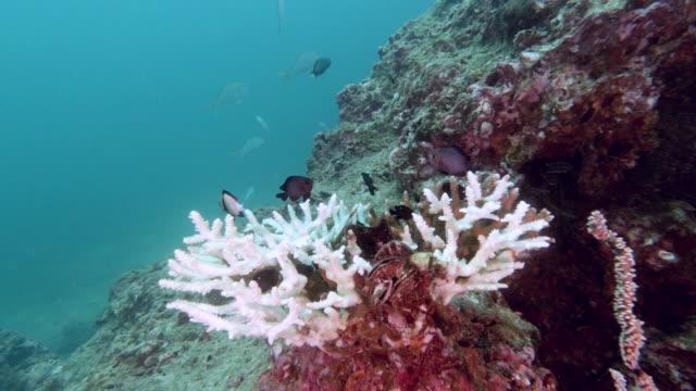 熱帯サンゴ礁海洋酸性化におけるサンゴの漂白 - 外骨格点の映像素材/bロール