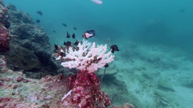 coral bleaching progression underwater environmental damage - ocean acidification stock videos & royalty-free footage