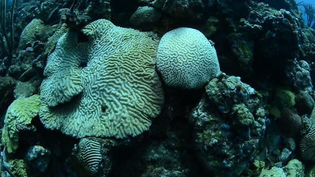 coral bleaching. - dykarperspektiv bildbanksvideor och videomaterial från bakom kulisserna