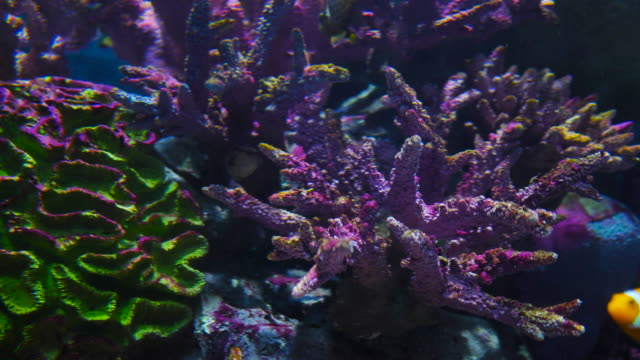 Coral colony on the reef