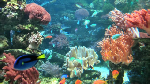coral colony on the reef - aquarium stock videos & royalty-free footage