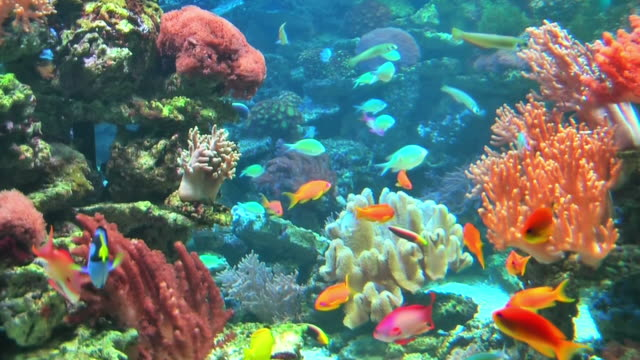 coral colony on the reef - caribbean sea stock videos & royalty-free footage