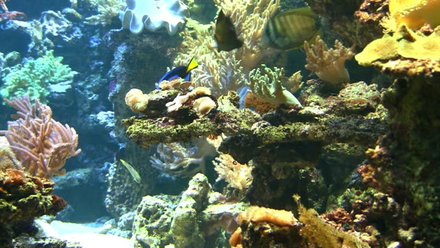 coral colony on the reef - aquarium stock videos and b-roll footage