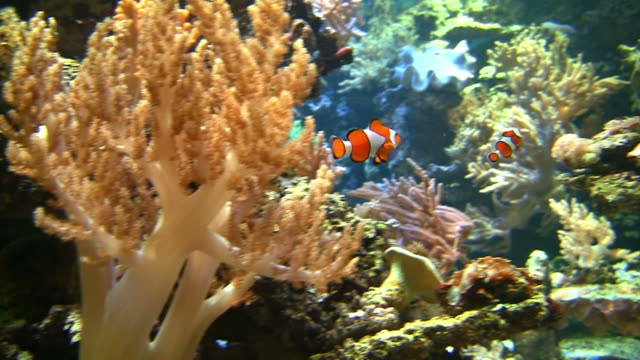 coral colony on the reef - four animals stock videos & royalty-free footage