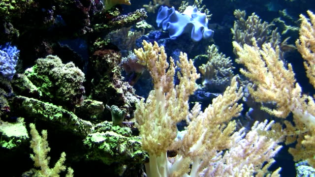 coral colony - salt water fish stock videos & royalty-free footage