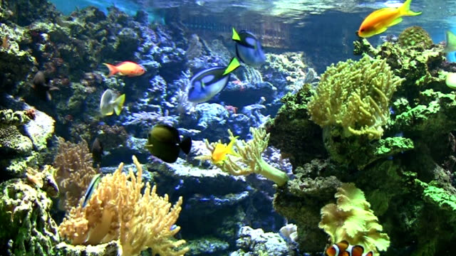 coral colony - aquarium stock videos & royalty-free footage