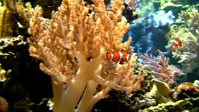 Coral colony