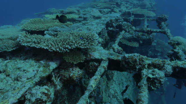 korallen bedeckten das gesamte schiffswrack auf den malediven in der tiefsee - wrack stock-videos und b-roll-filmmaterial