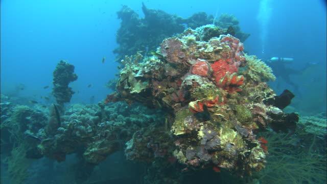 coral covers a world war ii shipwreck. - postwar stock videos & royalty-free footage