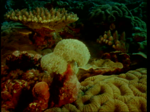 coral for bone transplant; new caledonia underwater gv various types of coral on seabed gv ditto tcms ditto l-r tcms anemone tcms flat coral tcsm... - french overseas territory stock videos & royalty-free footage