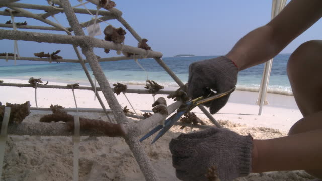 coral fragments attached to artificial reef structure, landaa giraavaru, the maldives - restoring stock videos & royalty-free footage