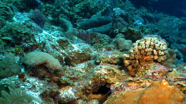coral garden in tropical Caribbean reef