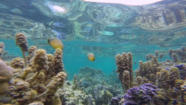 coral gardens, bora bora, cook islands - south pacific ocean stock videos & royalty-free footage