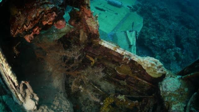 vidéos et rushes de corail se développent sur épave sous-marine hydravion de wwii, palau - épave