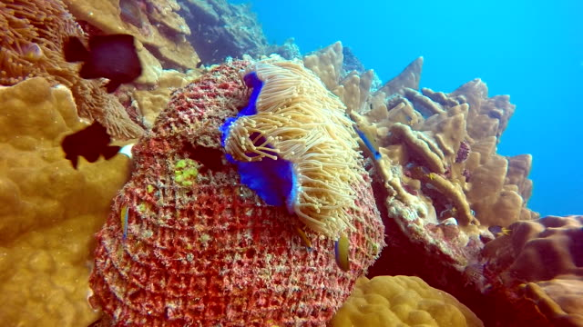 coral growing on underwater fishing ghost net environmental damage. - trapped stock videos & royalty-free footage