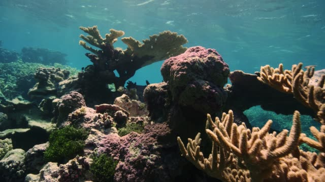 coral inside the lagoon at palmyra atoll, part of pacific remote islands marine national monument. - micronesia stock videos & royalty-free footage