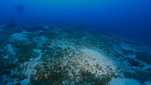 サンゴのキラー: 砂で育つ黒病 - ソフトコーラル点の映像素材/bロール