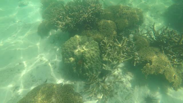 vídeos y material grabado en eventos de stock de vida coral buceo - escafandra autónoma
