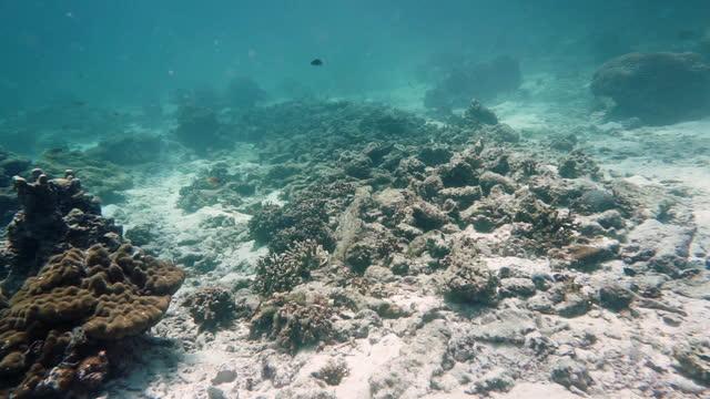 vídeos de stock e filmes b-roll de coral nursery artificial reef growing baby corals to combat climate change thailand - acidificação dos oceanos