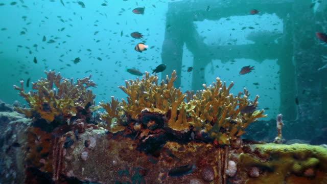 vídeos de stock e filmes b-roll de coral nursery underwater artificial reef environmental conservation project - acidificação dos oceanos