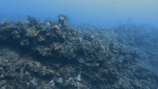 """stockvideo's en b-roll-footage met """"coral on sea bed, gulf of mexico"""" - golf van mexico"""