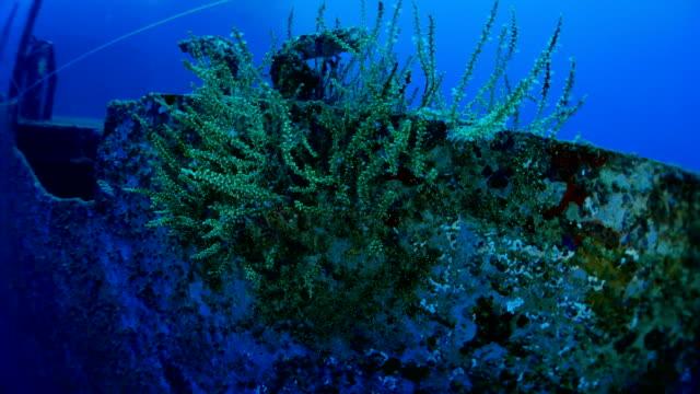 koralle auf dem bootsdeck wrack - passagier wasserfahrzeug stock-videos und b-roll-filmmaterial