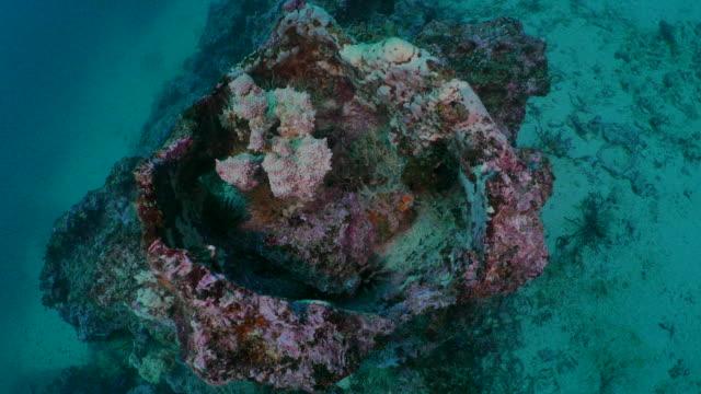 vídeos y material grabado en eventos de stock de coral en submarino rcok, galápagos - esponja