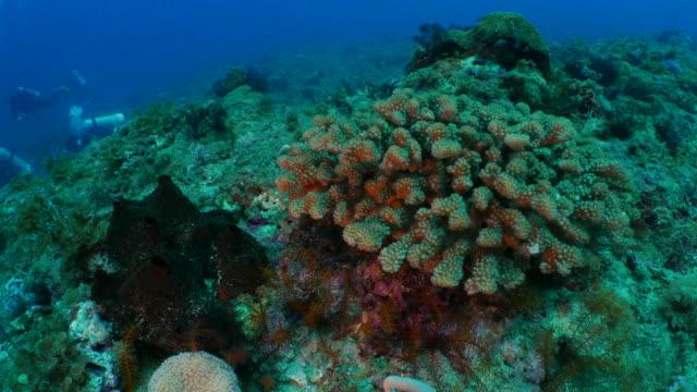 coral pinnacle in undersea reef - mar stock videos & royalty-free footage