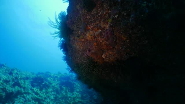 Coral pinnacle undersea, Taiwan