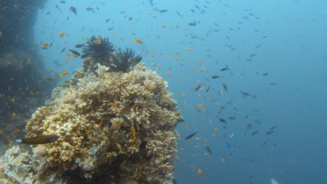 vídeos y material grabado en eventos de stock de coral reef and groups of fish - organismo acuático