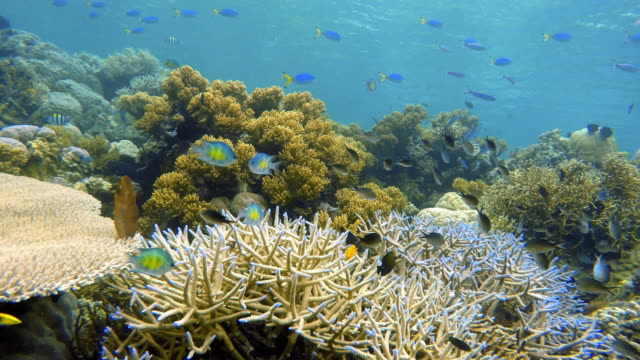 Coral reef and school of fish