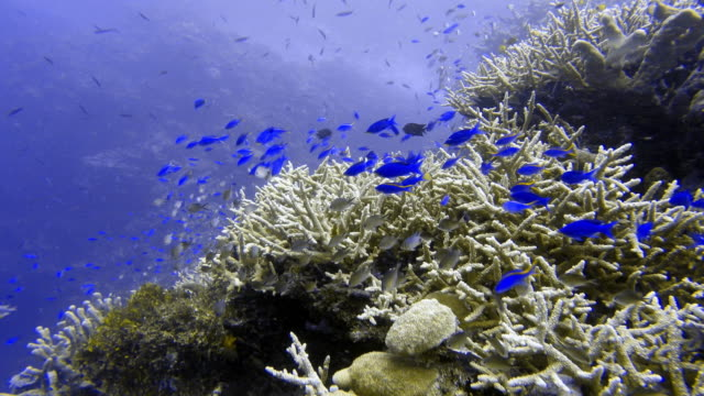 coral reef and school of fish - reef stock videos and b-roll footage