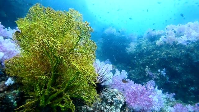 "coral reef at ""Hin Khao"" pinnacle. near Bara estuary and Lipe Island very beautiful attraction, Stun provience, Thailand"
