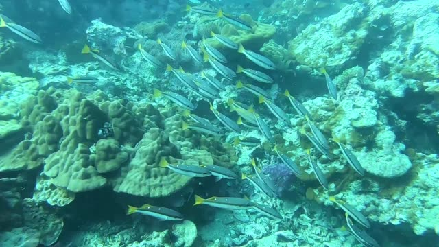 "coral reef at ""shark point ""  phuket island very beautiful attraction, thailand - red sea stock videos & royalty-free footage"