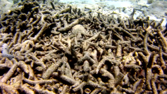coral reef bleaching on damaged fragile ecosystem ocean environment - reef stock videos & royalty-free footage