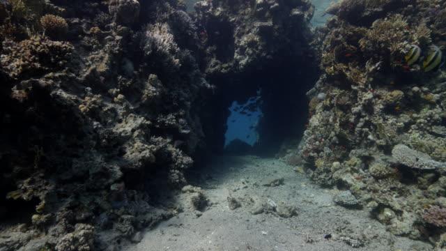 coral reef cave - unterwasseraufnahme stock-videos und b-roll-filmmaterial
