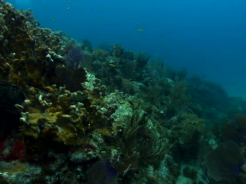 coral reef contours and wiggling coral - anna maria island stock videos and b-roll footage