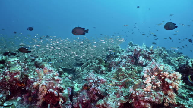 coral reef ecosystem biodiversity cabon capture system - glass fish stock videos & royalty-free footage