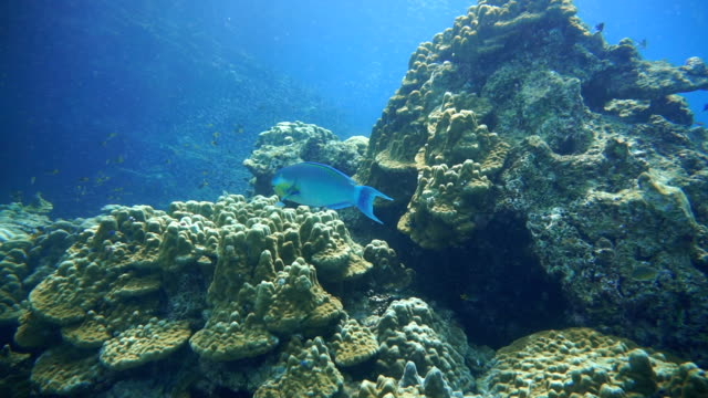 Coral Reef Fragile Ecosystem Ocean Environment. Koh Haa, Krabi, Thailand.