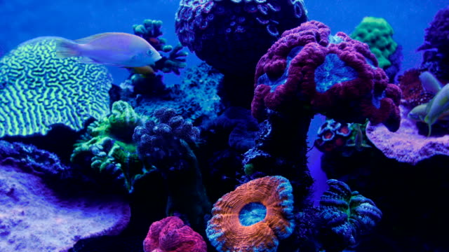 coral reef illuminated by ultra violet light