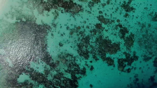 coral reef in crystal clear water, similan islands, thailand - david ewing stock videos & royalty-free footage