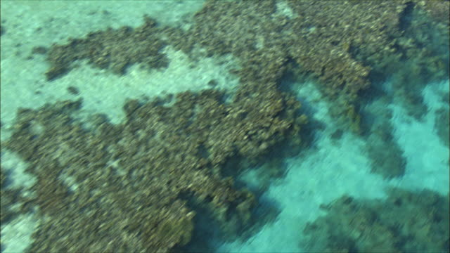 aerial cu coral reef in red sea, eilat, arava, israel - red sea stock videos & royalty-free footage