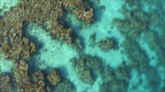 aerial cu coral reef in red sea, eilat, arava, israel - rotes meer stock-videos und b-roll-filmmaterial