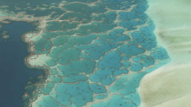 Coral reef in shallow tropical lagoon, Maupiti, French Polynesia