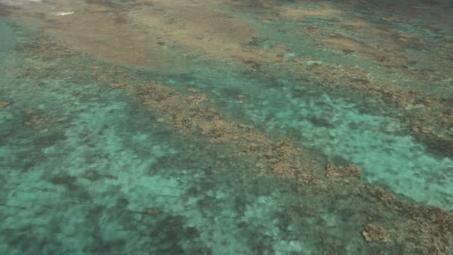 coral reef in shallow tropical lagoon, tahiti, french polynesia - shallow stock videos & royalty-free footage