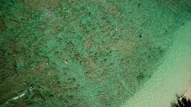 ちょうどマウイ島の砂浜海岸沖のサンゴ礁 - 谷点の映像素材/bロール