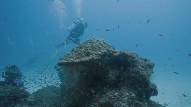 w/s uw coral reef life and recreational divers - dykarperspektiv bildbanksvideor och videomaterial från bakom kulisserna